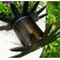 Arizona - negru cupru